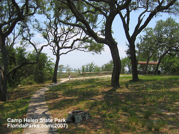 Camp Helen State Park Photo
