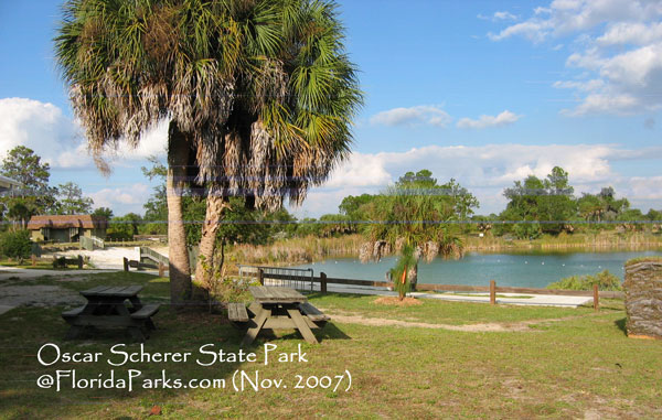 Oscar Scherer State Park Campground Photo