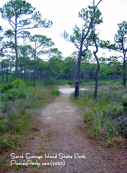 Saint George Island State Park Trail Photos